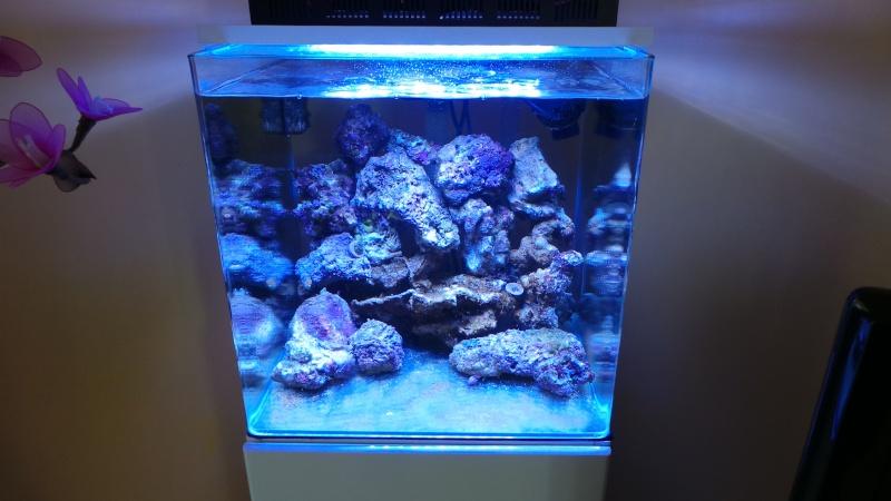 reef nano 20140328