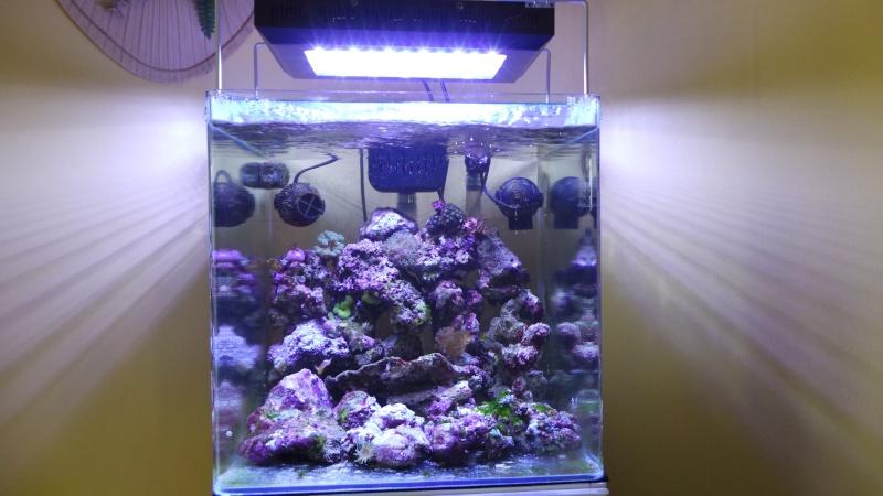 reef nano 20140511