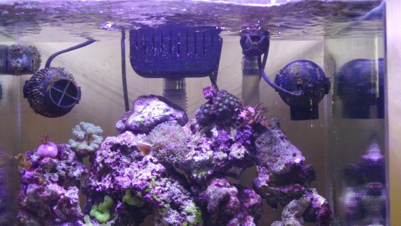 reef nano 20140512