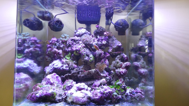 reef nano 20140513