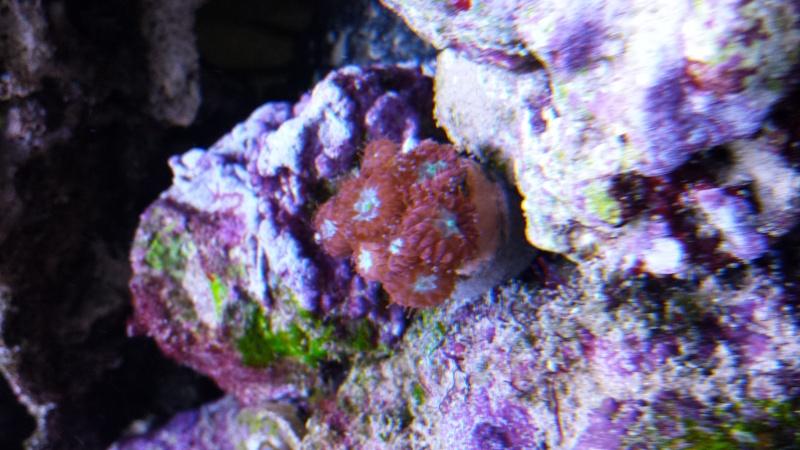 reef nano 20140514