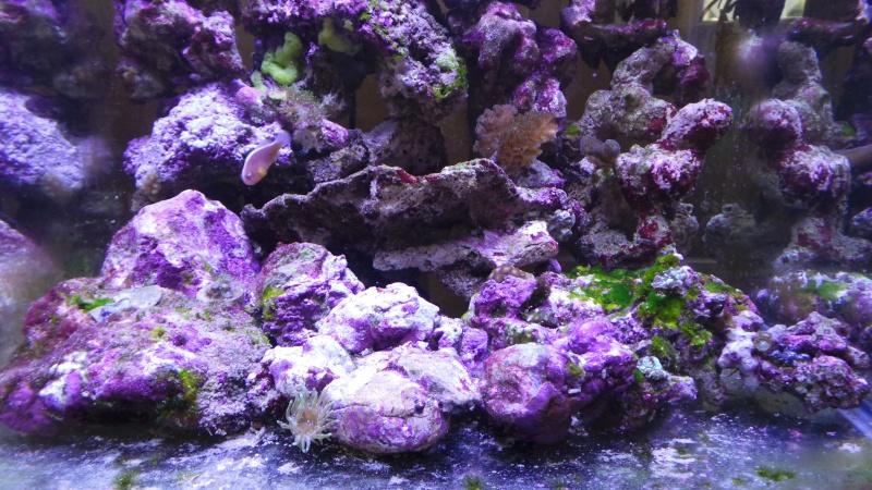 reef nano 20140515