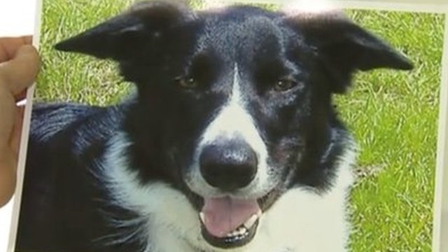 DOG KILLER DISEASE 124