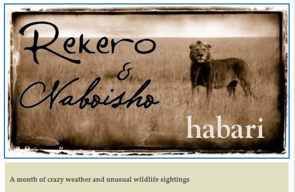 Rekero - News and Community - Page 7 1a10