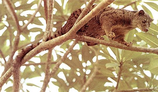 Petit carnivore très rare Image17
