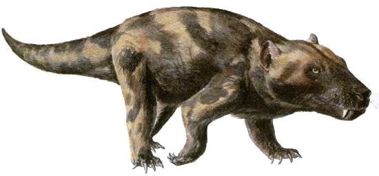 Reptile a oreils externes Image18
