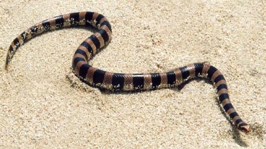 Les serpents  Image20