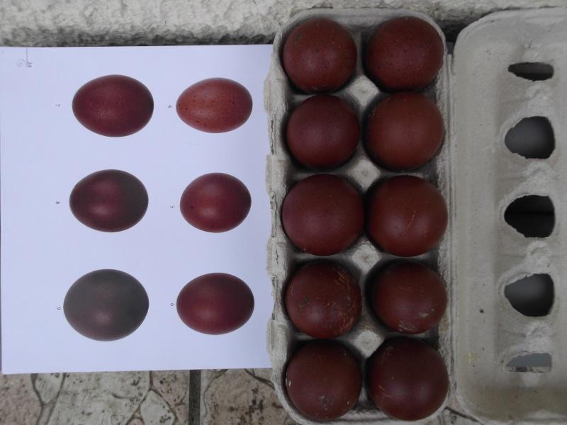 oeufs - Oeufs de mes poulettes 2013 Dscf0510