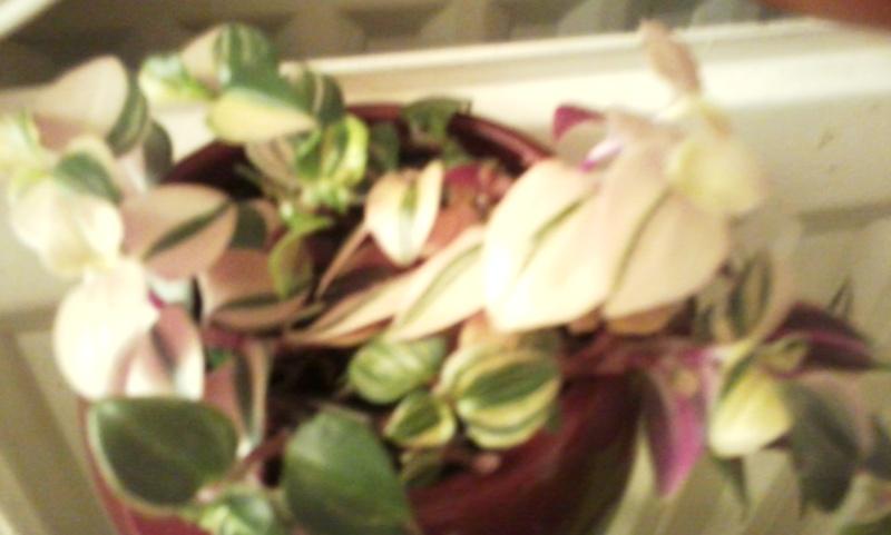 mes plantes Photo013