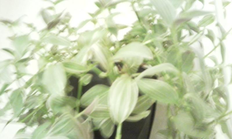 mes plantes - Page 2 Photo014
