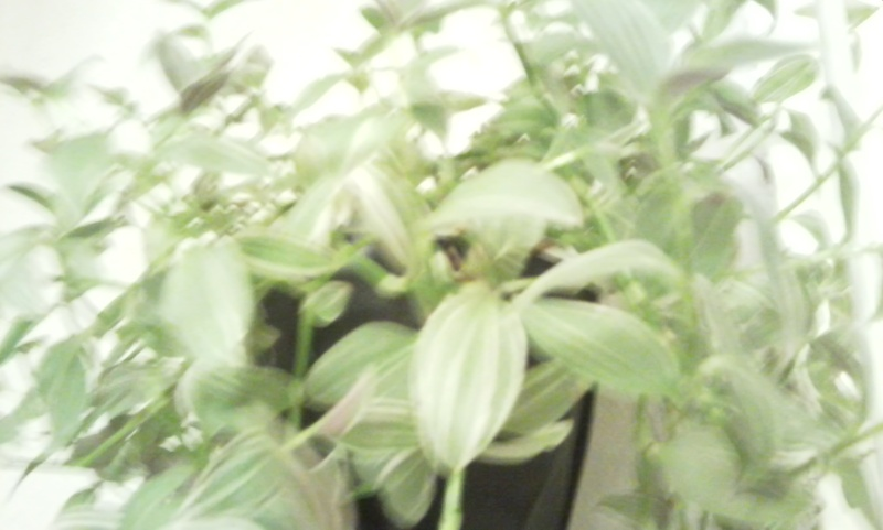 mes plantes Photo014