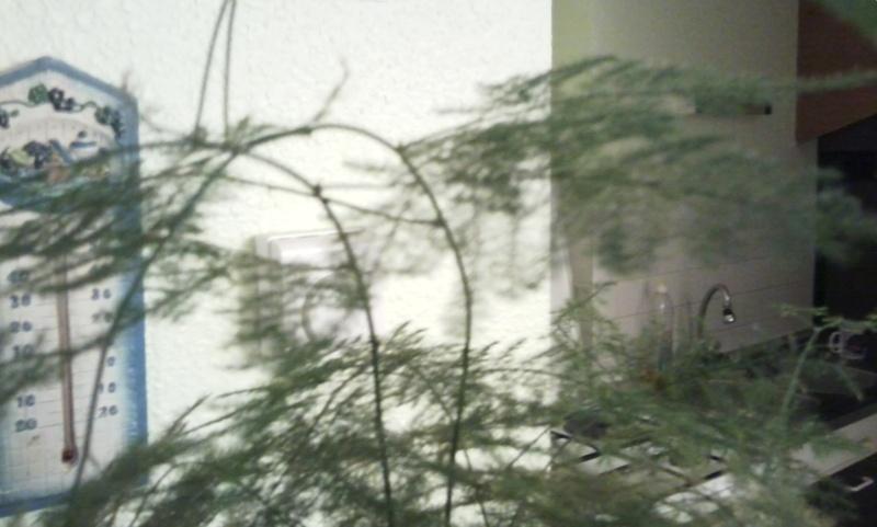mes plantes Photo015