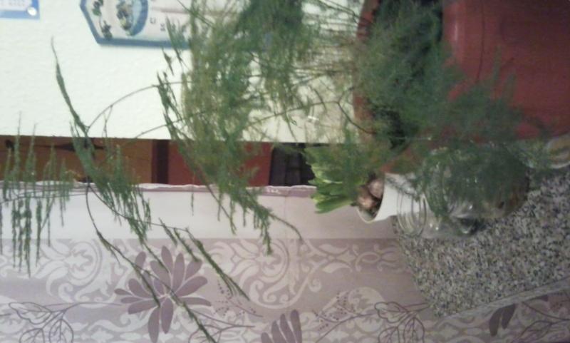 mes plantes Photo016