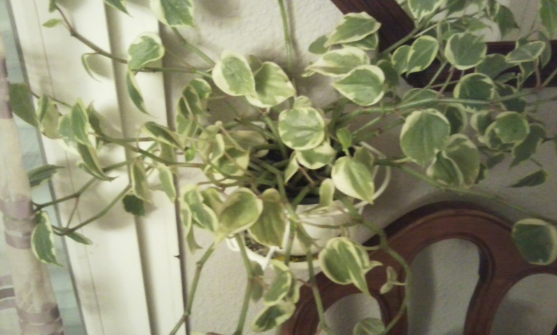 mes plantes Photo017