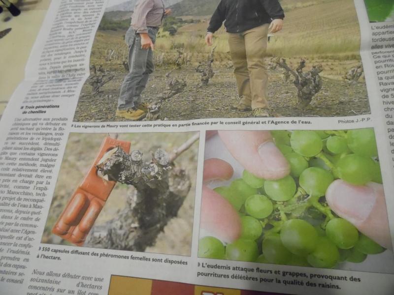 chenille danger pour les animaux et humains Sam_2012