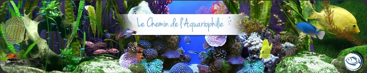 Le Chemin De L'Aquariophilie