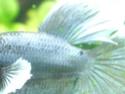 Mini-Grey -> RIP Dscf7639
