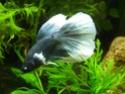 Mini-Grey -> RIP Dscf7859