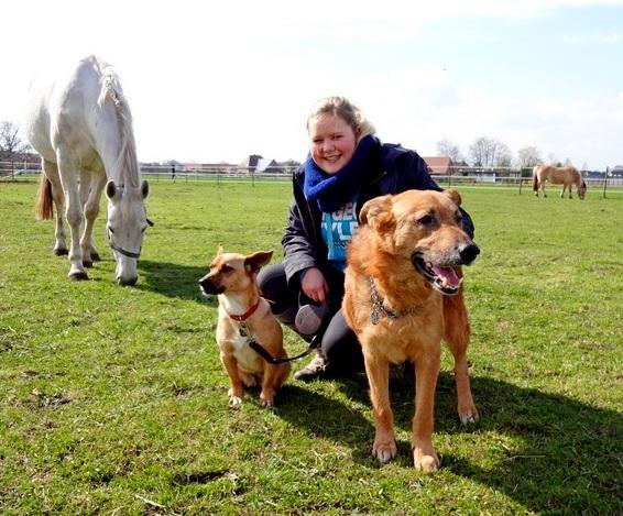 Hunde - und Pferdeverrückt!! Fröhliches Zuhause für kleine, agile Traumhündin gesucht! 519