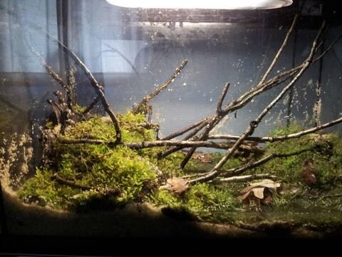 Micro Paludarium Pour Crabes Geosesarma Sp Vampire