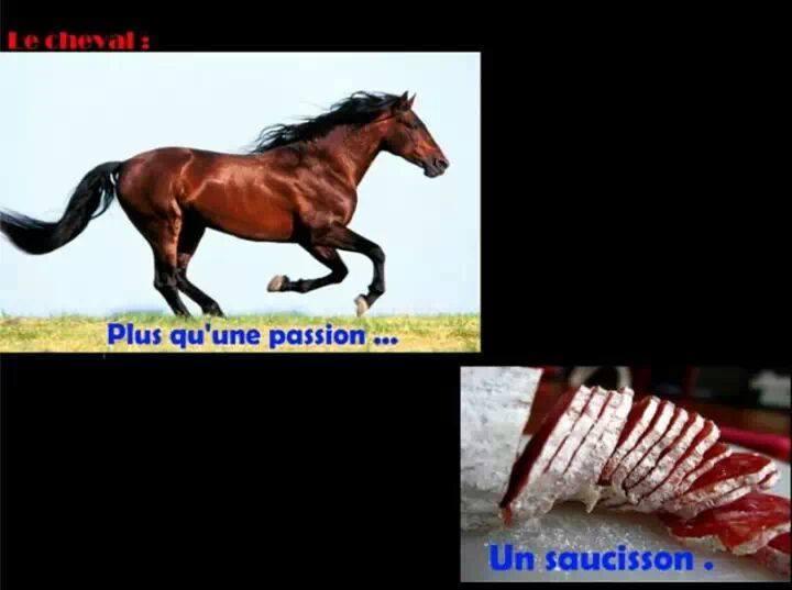 la débilité ne tue pas =) Cheval10
