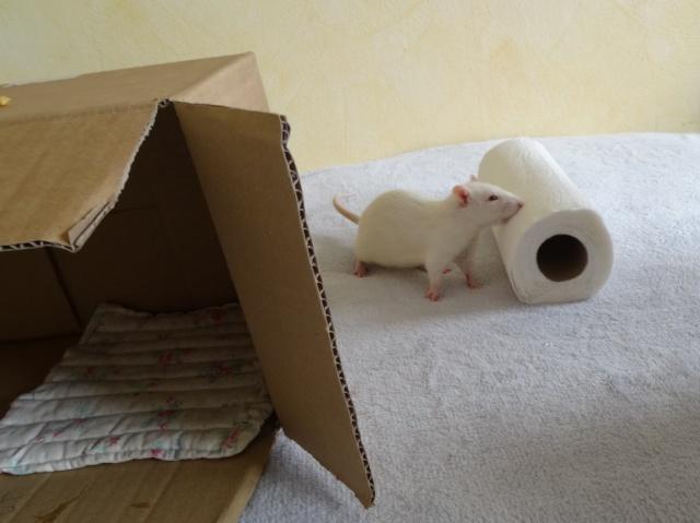 Sam, Dexter et Twitch, mes trois ratous  Dsc01816