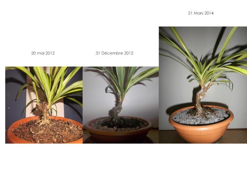 """chlorophytum """"arbustif""""? Evolut10"""