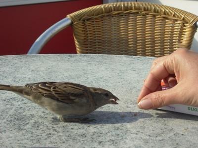 Ijmuiden (Hollande) Oiseau12