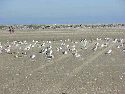 Ijmuiden (Hollande) Oiseau14