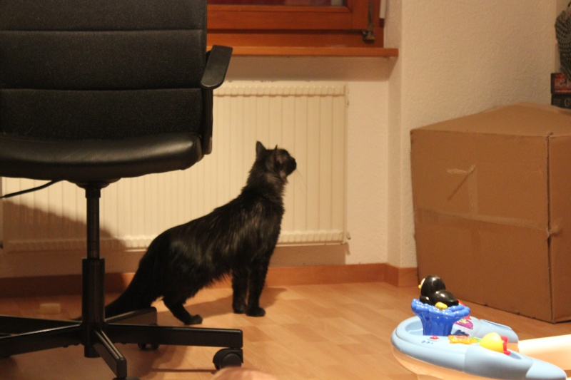 Loki Img_2012