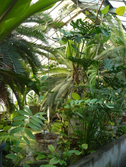 (Belgique) Serres du jardin botanique de Liège 995jhj10