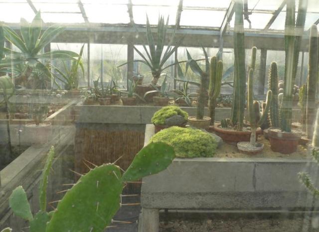 (Belgique) Serres du jardin botanique de Liège Cacte_10
