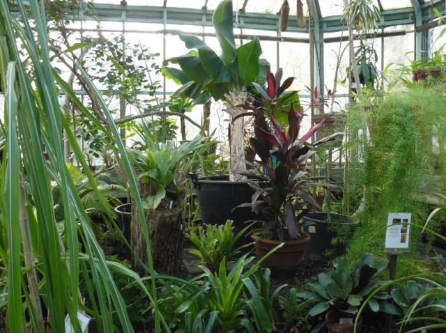 (Belgique) Serres du jardin botanique de Liège Fjgfjh10