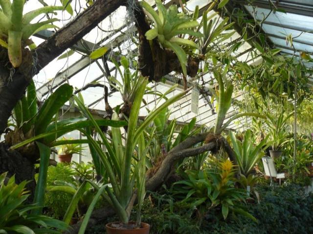 (Belgique) Serres du jardin botanique de Liège Kchgfg10