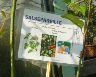 (Belgique) Serres du jardin botanique de Liège Khggh10