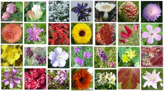 Concours : Patchwork végétal coloré. Participations (mosaïque de photos) - Page 2 Mosaaq10