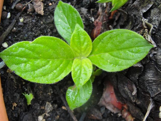 a votre avis es une plante , mais laquelle  Dsc09319