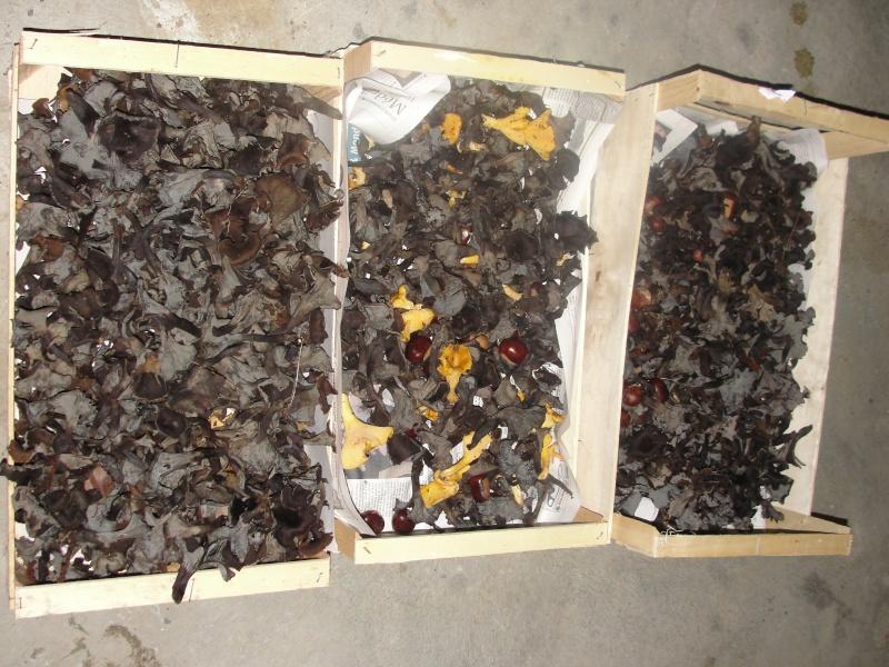 cueillette de champignons Dsc09410