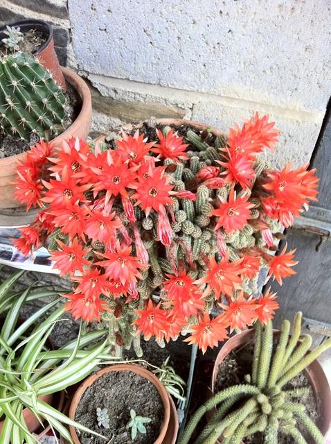 propose graines et boutures Fleurs10