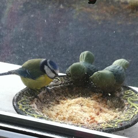 Quand nourir les oiseaux? - Page 3 Img_2316