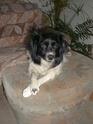 10 Jahre zu Hause/10 Jahre Hundepfoten in Not Pic00012