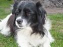 10 Jahre zu Hause/10 Jahre Hundepfoten in Not Rimg0510