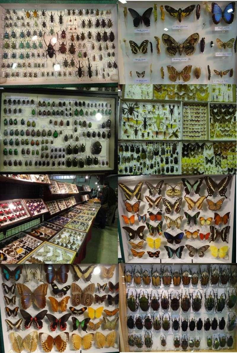 20° Bourse aux insectes de Perpignan  Bourse10