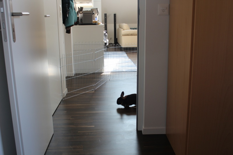 un lapin...?  - Page 3 Img_6713