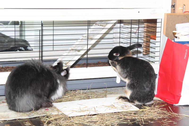 un lapin...?  - Page 3 Img_6714