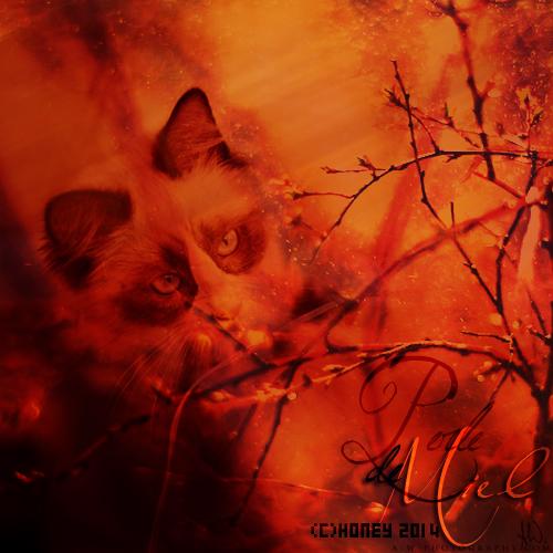 Liens d'une Plume couverte d'une fine parure d'Or, ou bien d'une Âme Silencieuse... Perle_13
