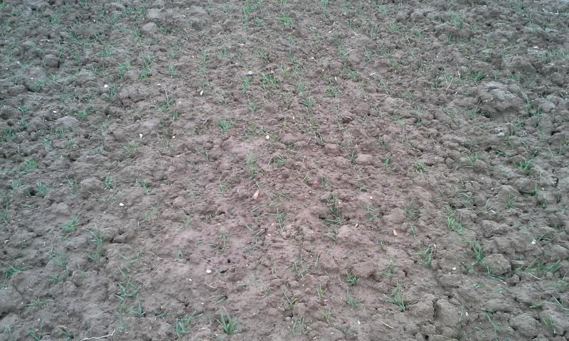 semis de blé 2013-2014 - Page 19 20140111