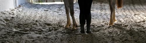 Premier cours d'équitation pour An' [Avec Lorenzo] Dsc04110