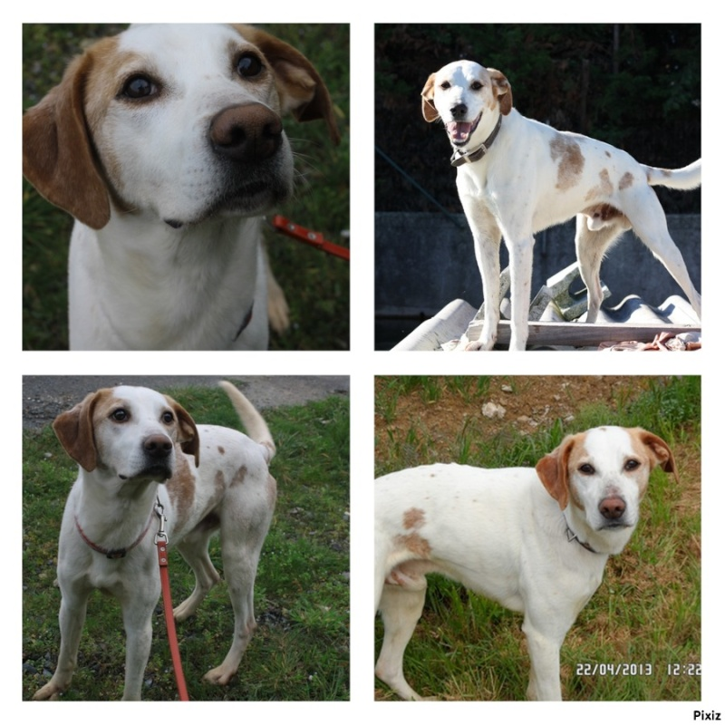 UNO, mâle type beagle, 3 ans (ASSO GALIA - 85) - Page 2 Akir10