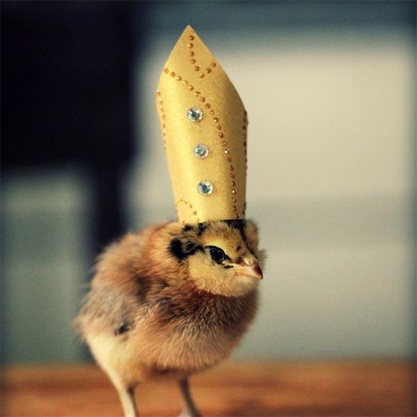 I dig chicks! Chicks10